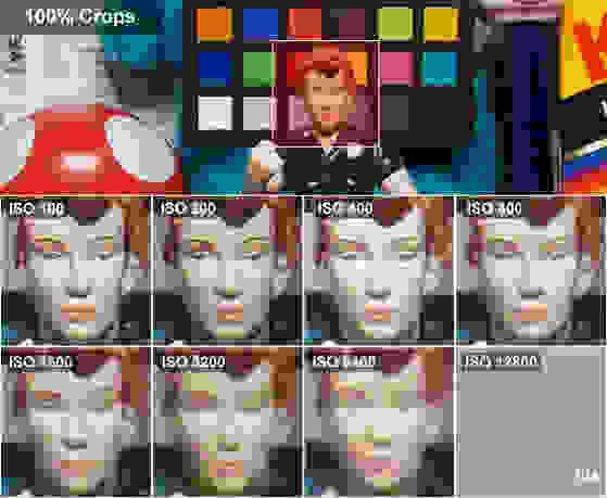 Q10RosieCrops.jpg