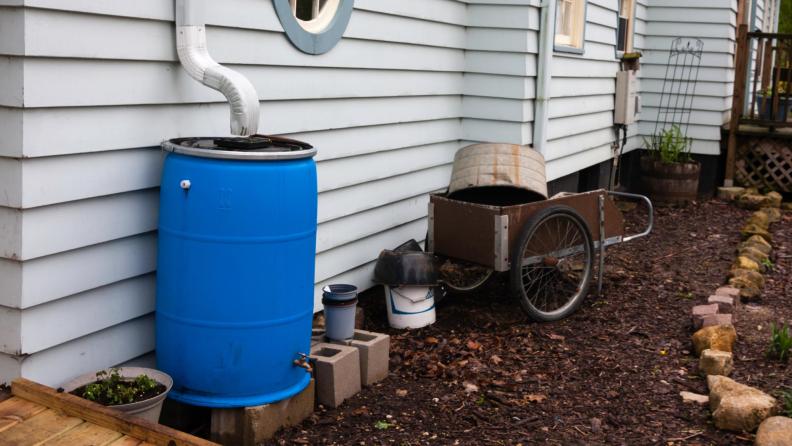 rain barrel backyard