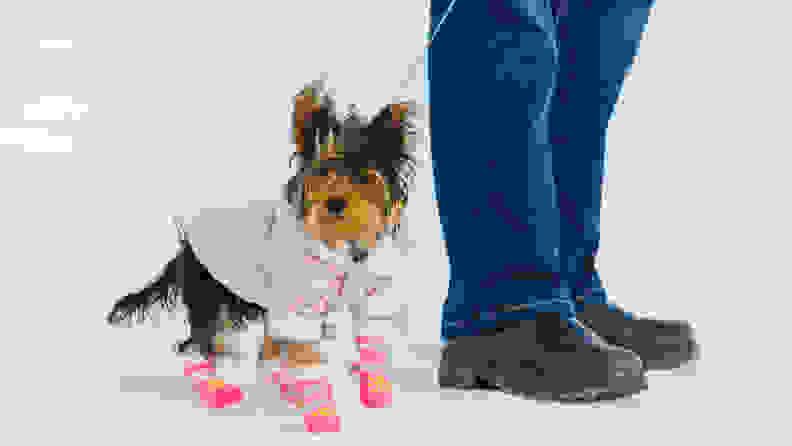 dogincoat