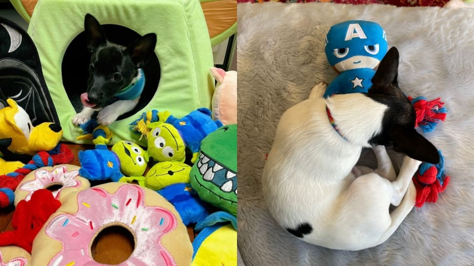 Left: Cash amongst all his Disney x Chewy Toys; Right: Cash cuddling with Captain America toy