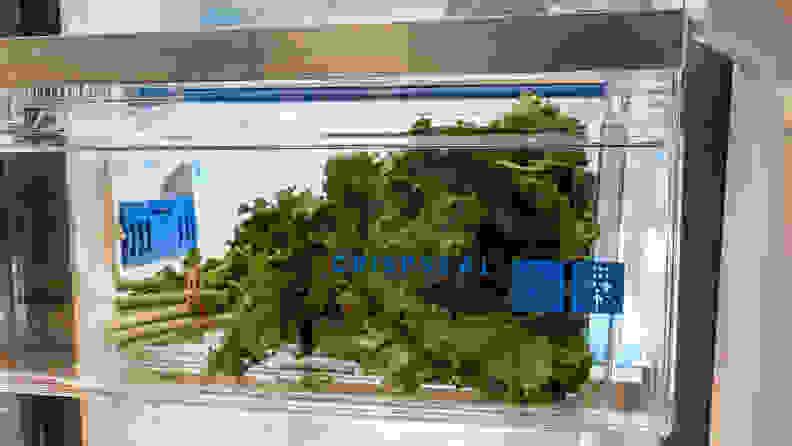 A shot of some leafy kale stored in the Frigidaire Gallery GRSC2352AF refrigerator's crisper.