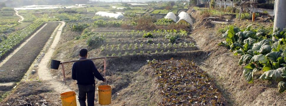 A Chinese farm.