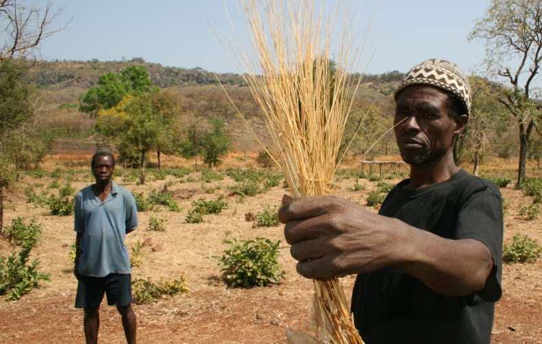 African villagers holding fonio.jpg