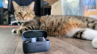 Jabra Elite 3, case open, sitting in front of a brown tabby cat