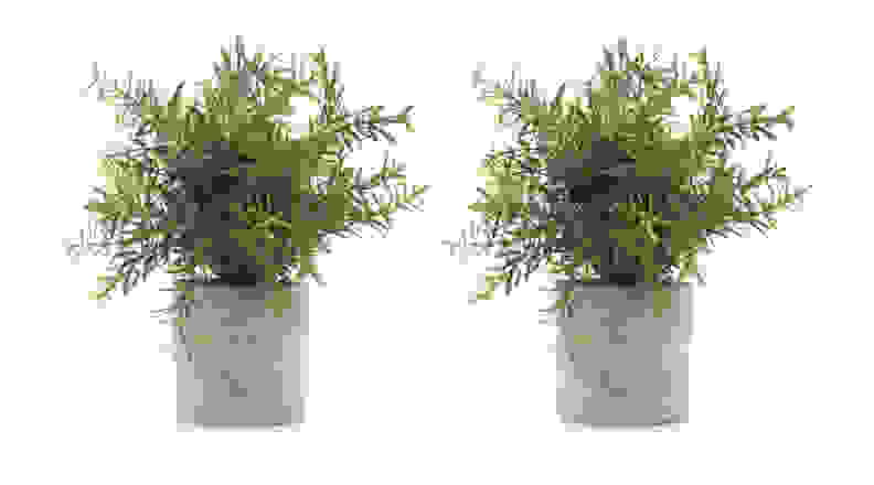 Mini Potted Plants