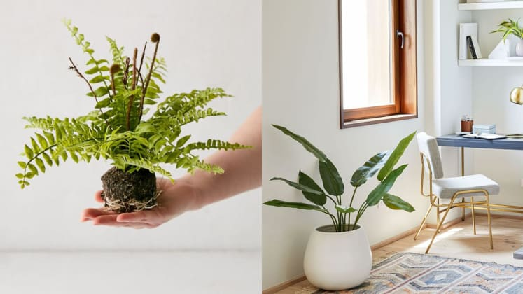 10 Best Places To Buy Artificial Plants And Trees Online