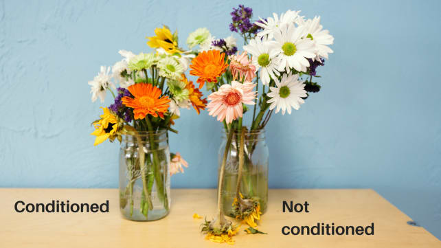 Flowers-conditioned-and-not
