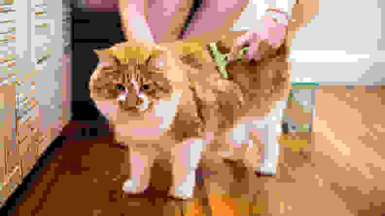a person brushes a fluffy orange and white cat using the safari undercoat rake