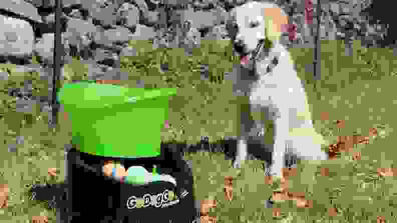 The GoDogGo Fetch Machine is cool, but it's not for everyone.