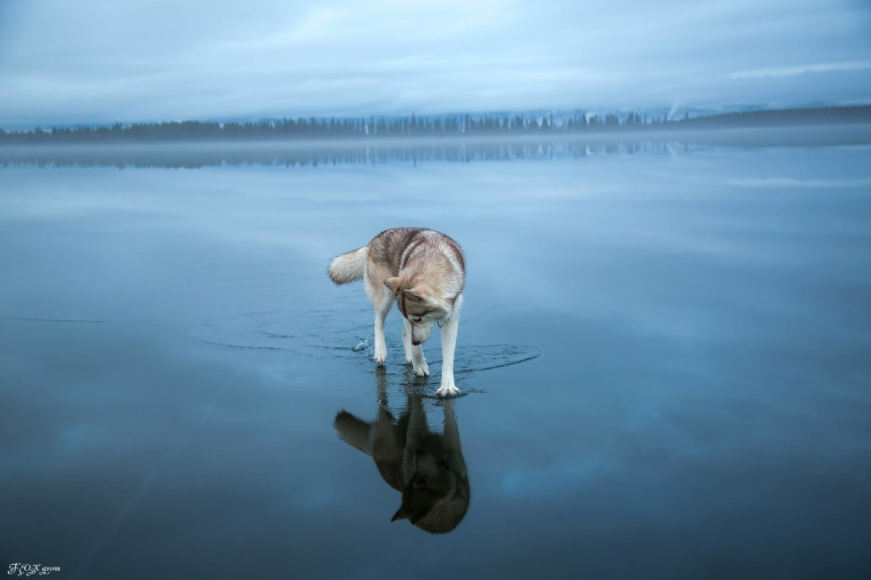 Huskies-Walking-On-Water-11.jpg