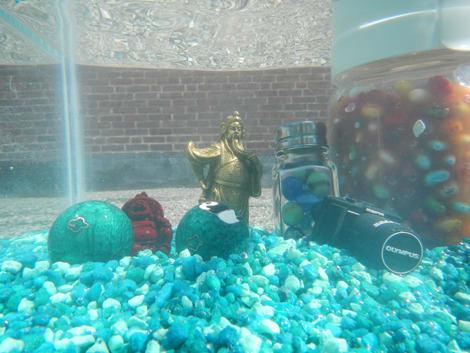 nikon-aw100-underwater-small.jpg