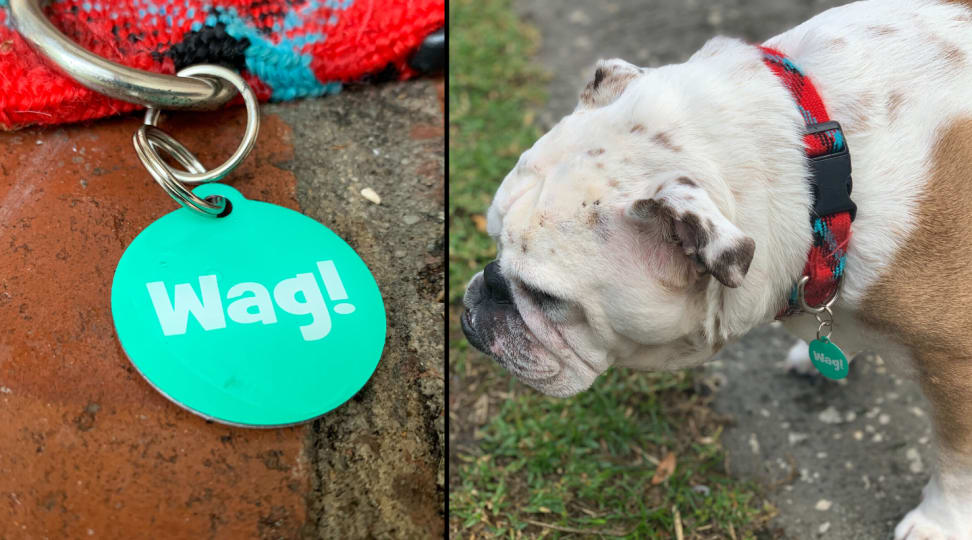 Wag Tag Review: Can this $10 tag keep your dog safe?