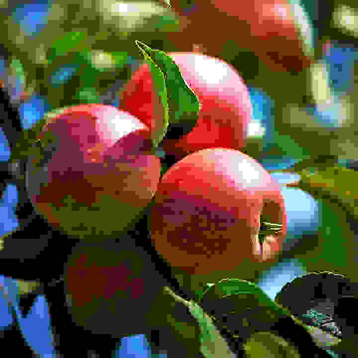 With a long picking season and irregular sizes, the Paradis Sparkling may not ever be a commercially viable apple variety.