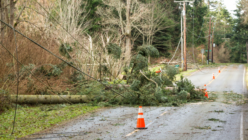 Fallen trees and downed power lines next to a street with an orange cone next to the tree