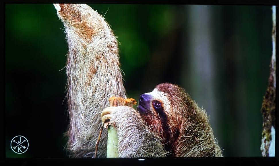 Samsung-KS8000-4K-Sloth