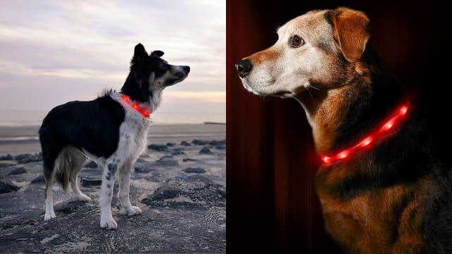 Illumiseen LED Dog Collar