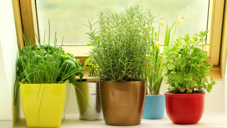 colorful herb pots