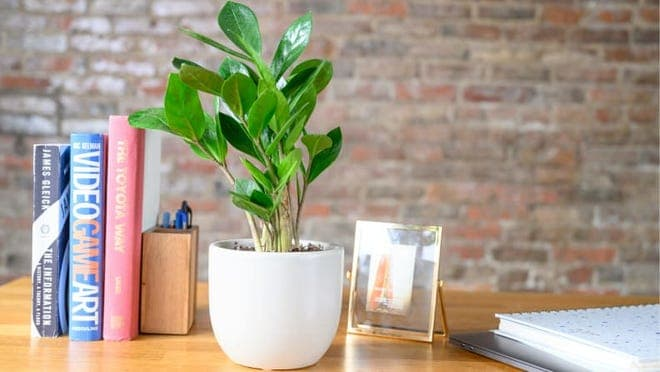 A green plant it on a wood desk.