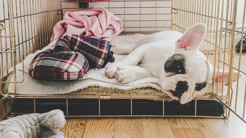 A french bull dog lays in a dog crate with blankets