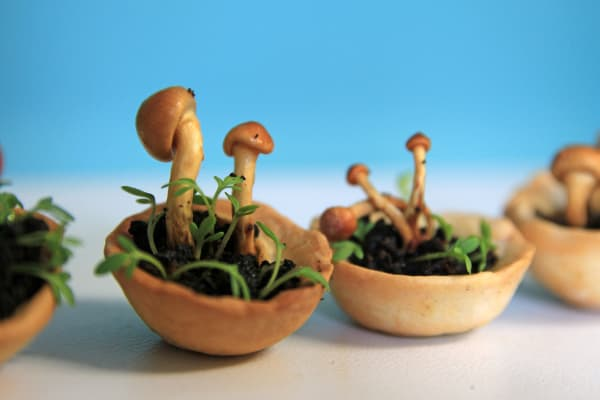 Without their caps, the Edible Growth looks like a really tiny planter pot.