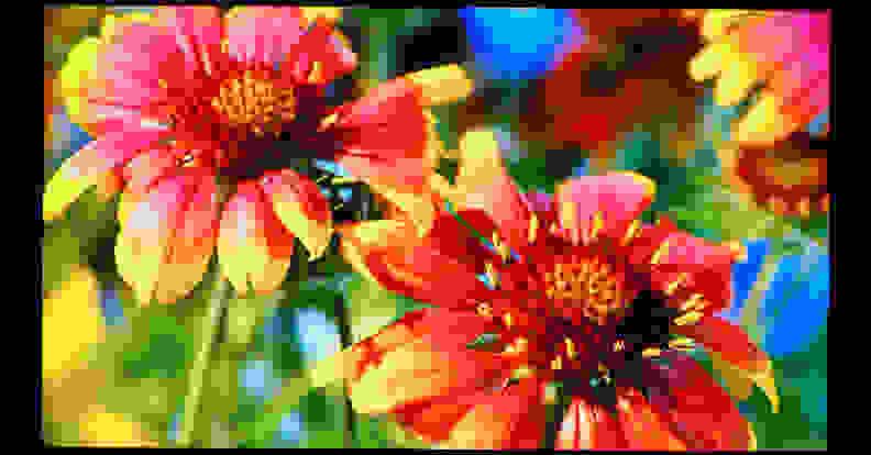 MA-flowers-wildflowers