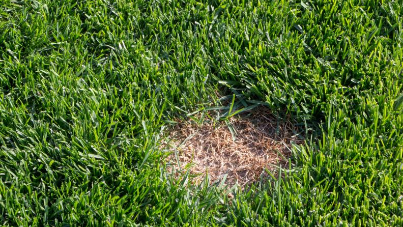 dead-grass