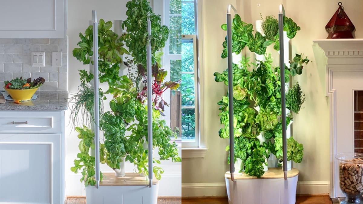 This vertical garden device makes indoor gardening possible