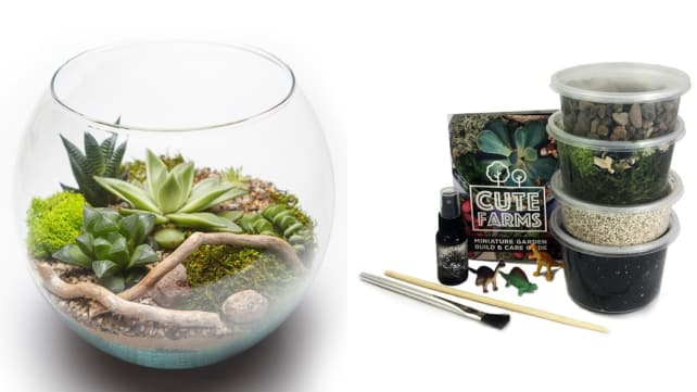 Cute Farms Terrarium Starter Kit