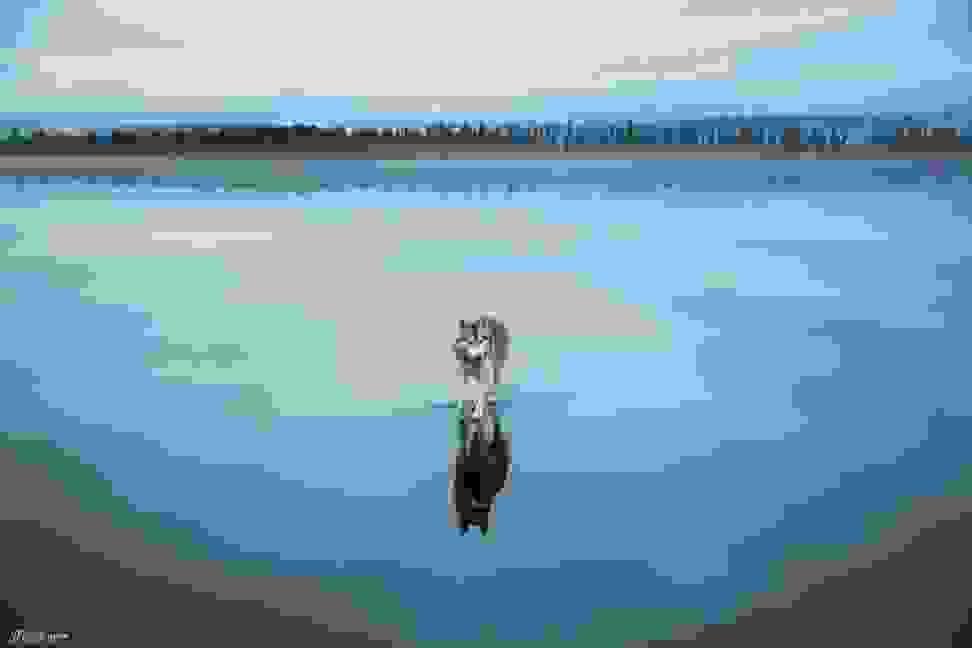 Huskies-Walking-On-Water-2.jpg