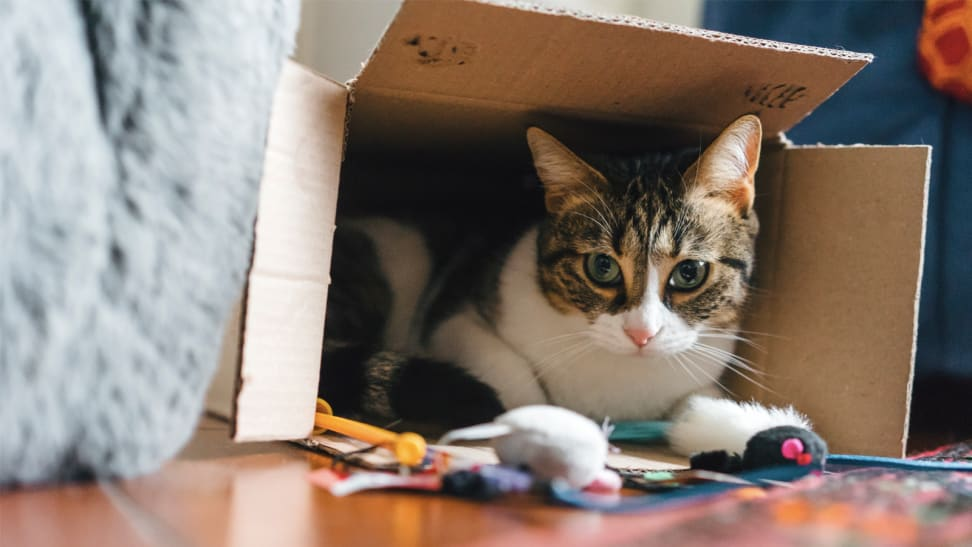 A cat peeks out of a cardboard box