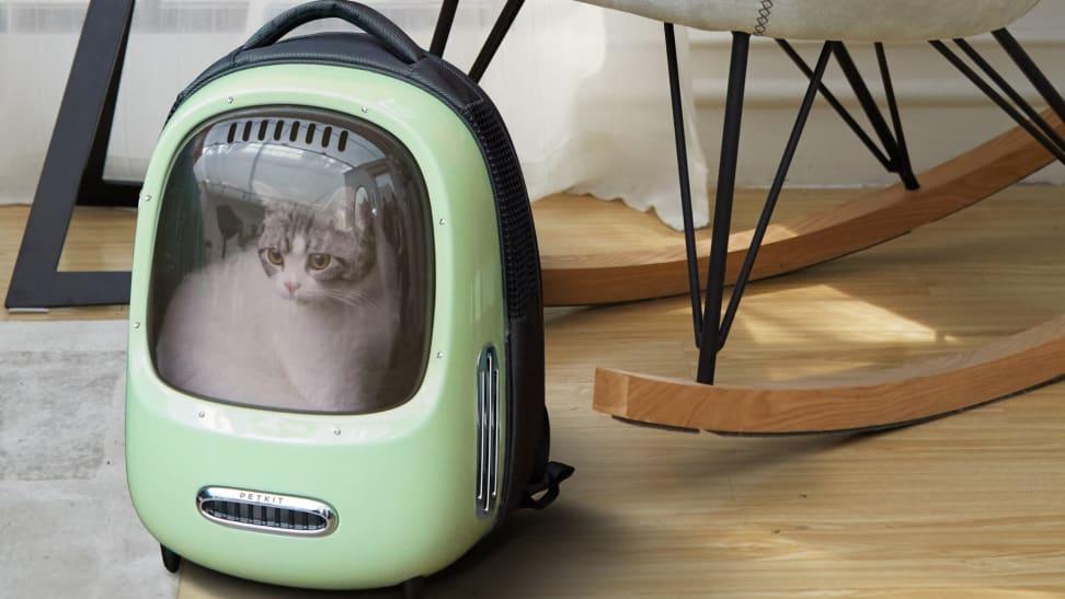 A cat sits inside a cat backpack.