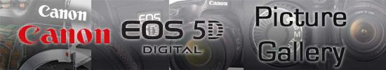 EOS5D-Tease.jpg