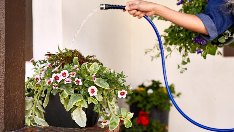 Watering plants.