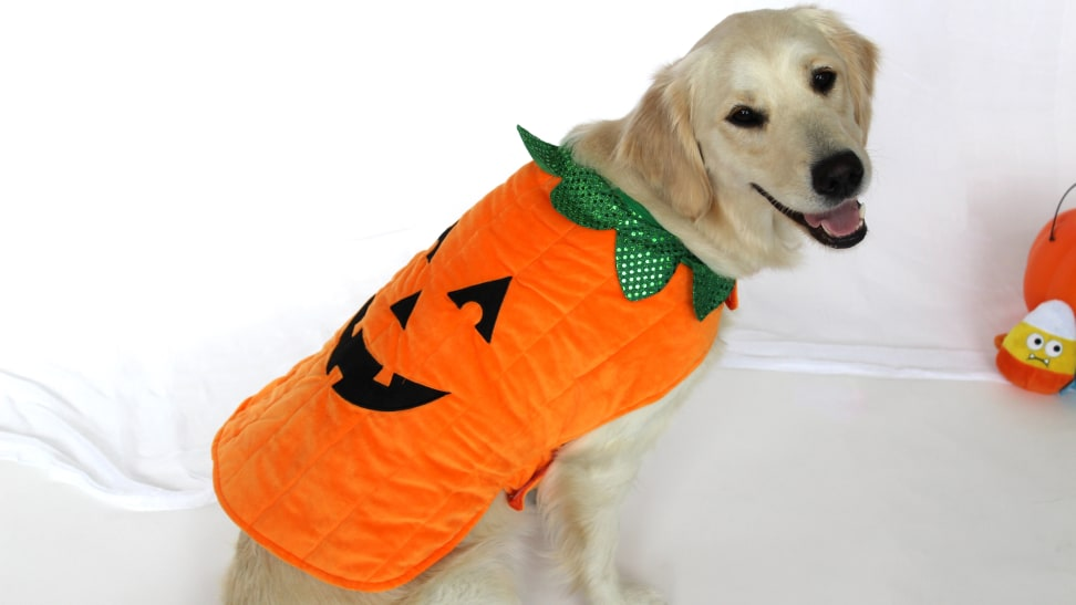 Chewy carries a wide selection of dog Halloween costumes.