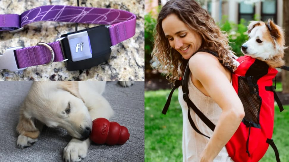 Several images, one of a dog in a backpack, one of a dog collar, and one of a small dog with its nose pressed to a KONG.