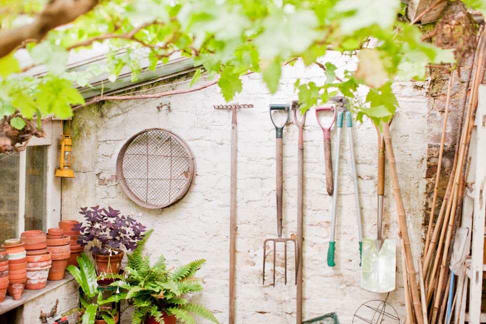 Tools hanging on a wall of garden shed