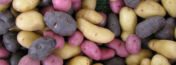 Mail a spud potato hero
