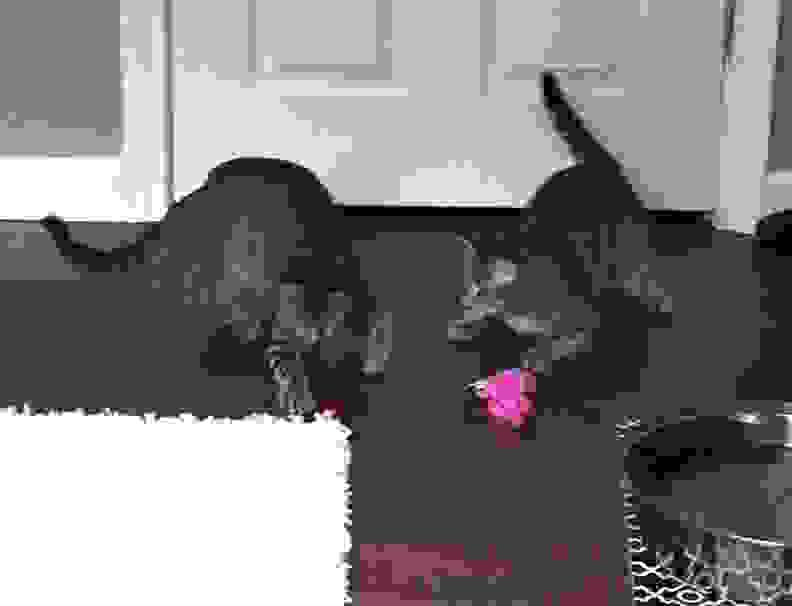 pinkmen2