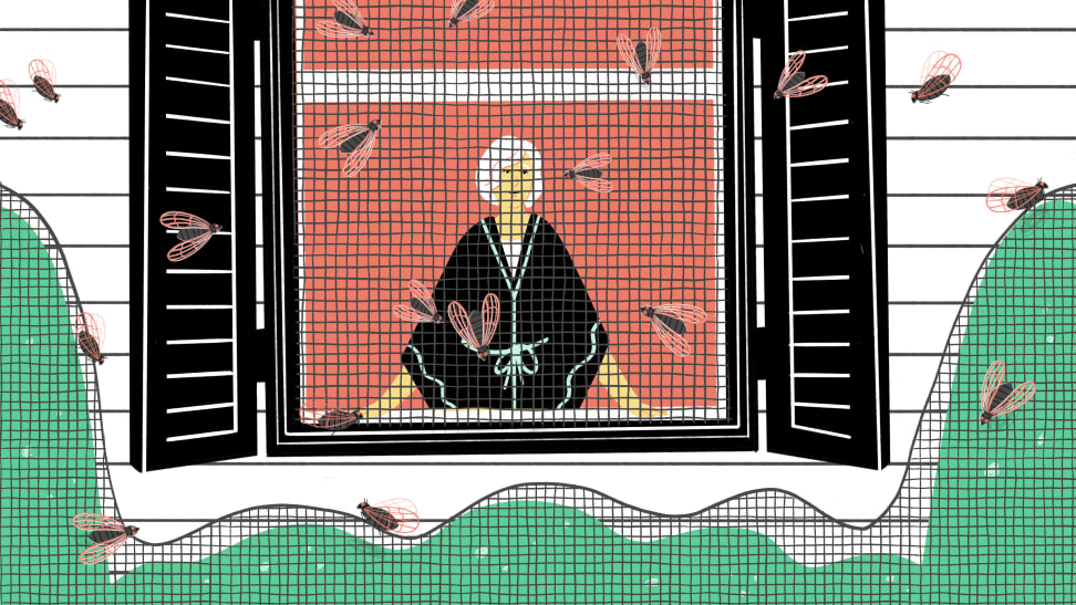 Illustration of person indoors watching cicadas fly outside of their screened-in window