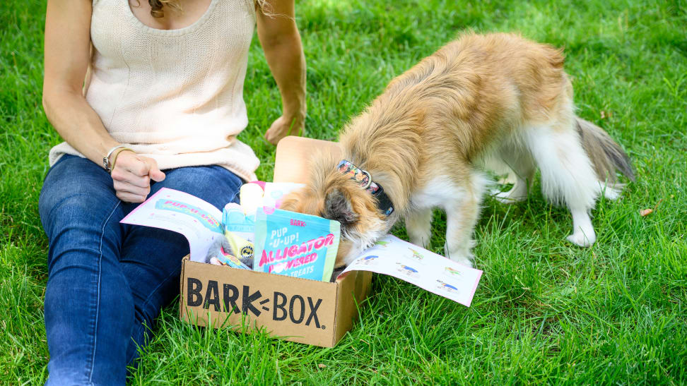 Bark box cute dog head inside