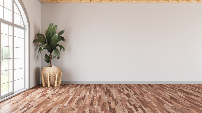 An empty modern living room with a white wall and plant.