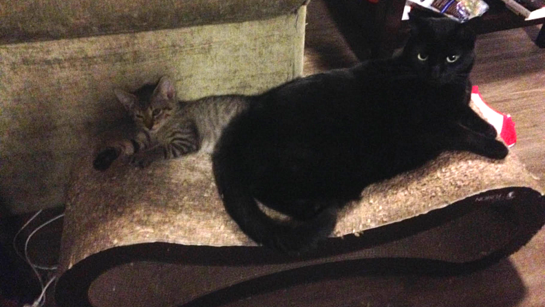 Two cats on a lounger