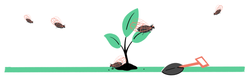 delay planting