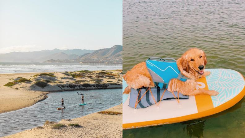 Dog on a paddleboard.