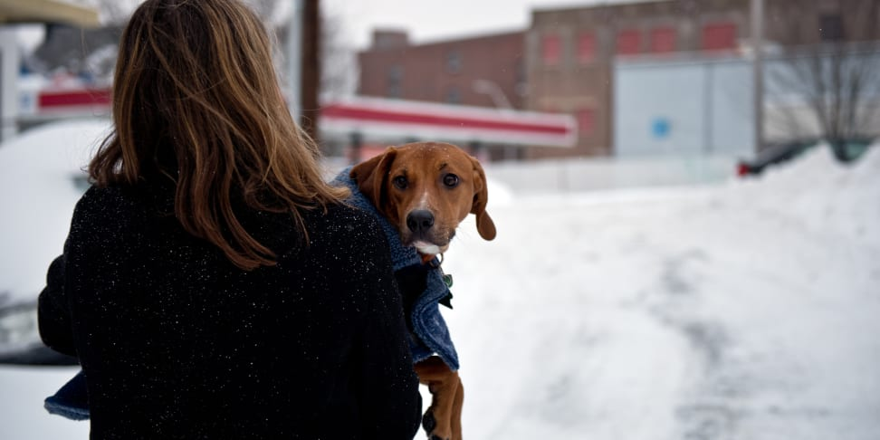 A woman holds a dog during Winter Storm Juno in Somerville, MA.