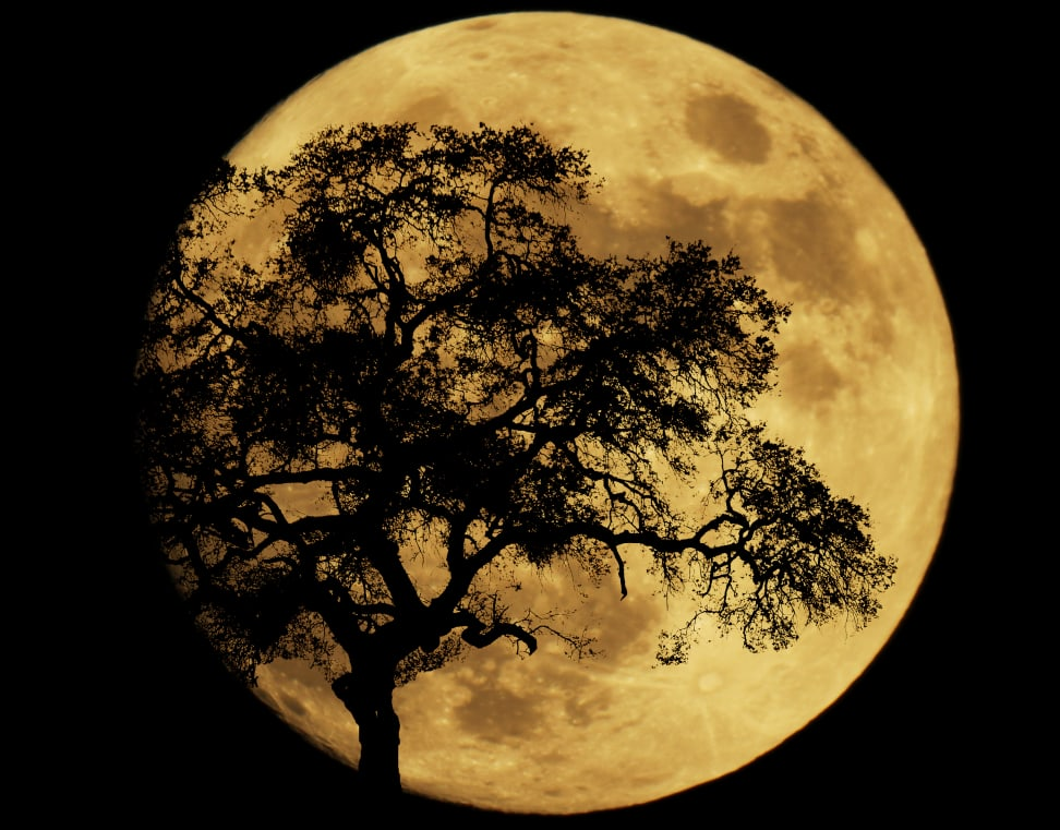 Photographing tonight's supermoon? We've got you covered.