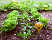 Edyn Garden Sensor 3.jpg