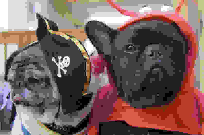 HP-D7560-dogs1-full.jpg