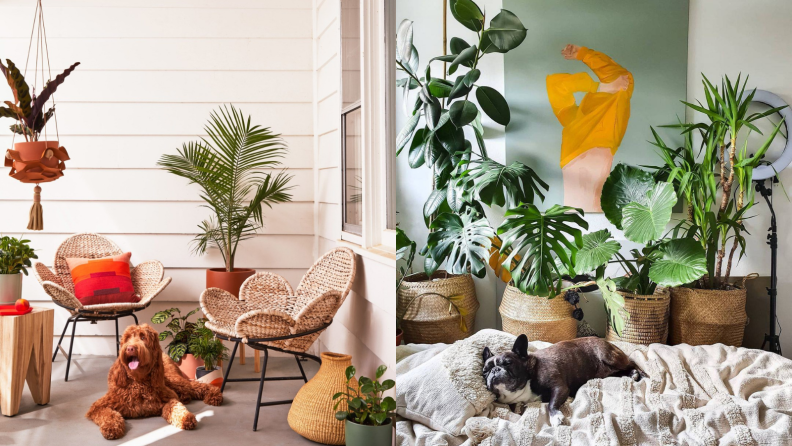 Left: A brown dog sits on the floor surrounded by plants; Right: a black dog sleeps by numerous plants.