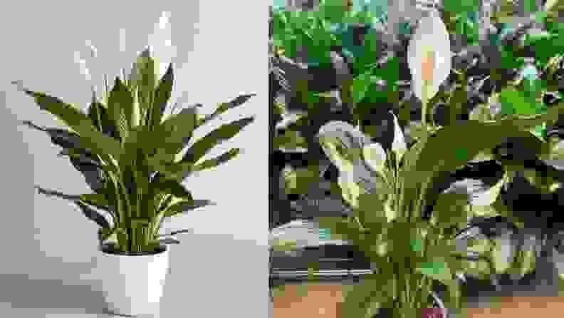 Pretty In Green Plants